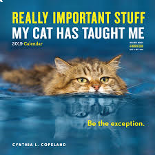 REALLY IMPORTANT STUFF MY CAT HAS TAUGHT ME CALENDAR 2019. /стенен календар/