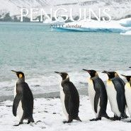 PENGUINS 2013. /стенен календар/